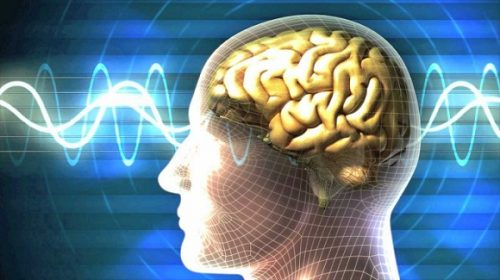 Midbrain Activation secrets